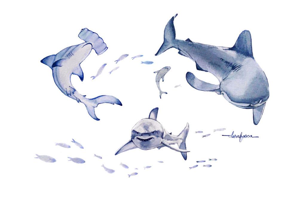 Sharks Watercolour