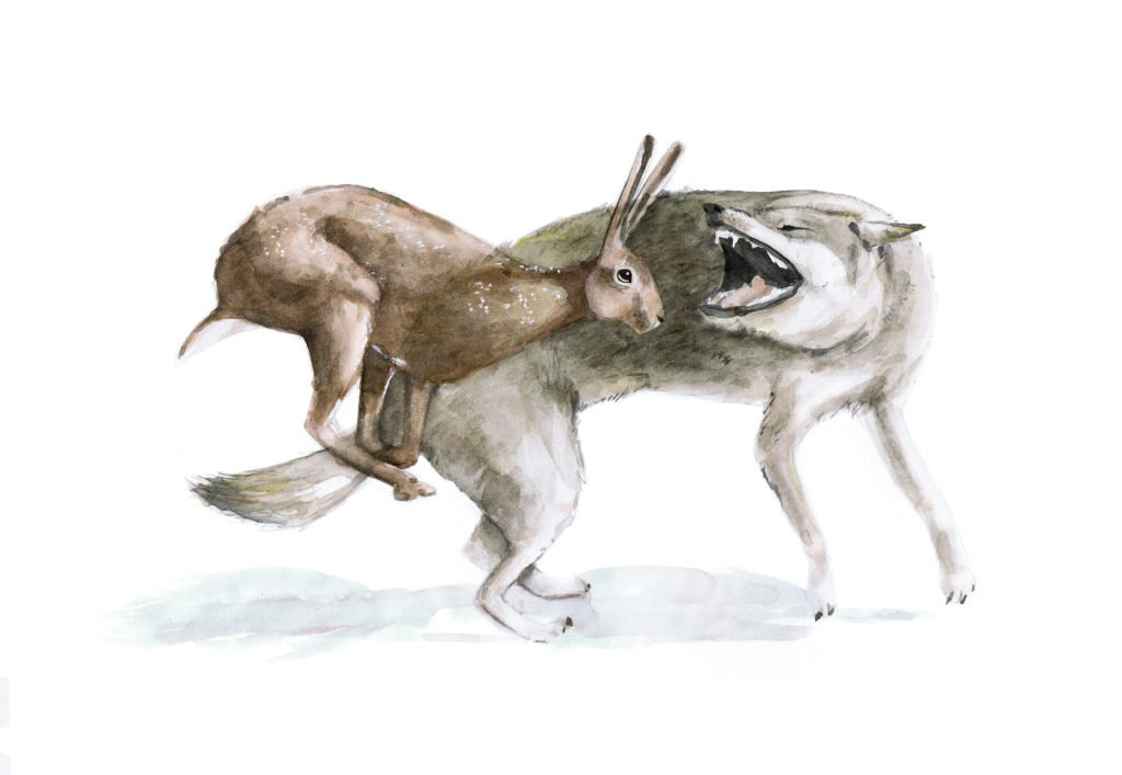 Liebre vs. Lobo