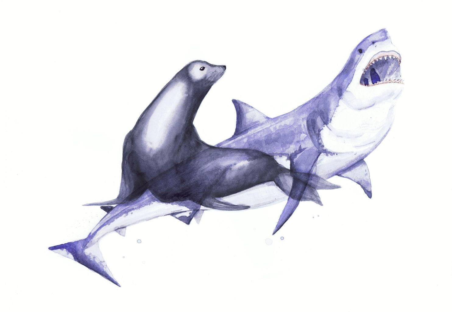 tauro-foca